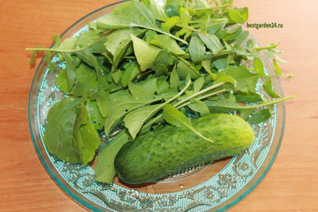руккола и огурец для салата