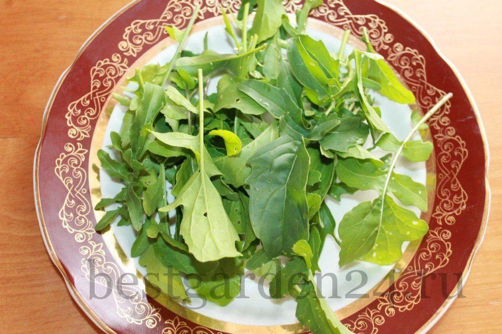 Руккола для салата