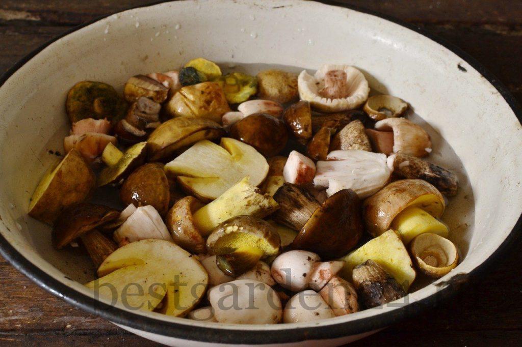 Подготовка грибов для мариновки