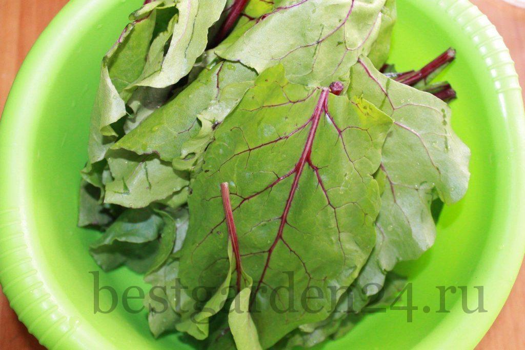Листья свеклы для второго блюда