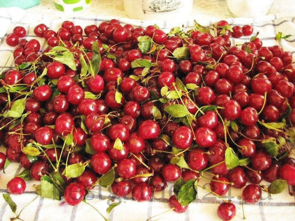 Вкусная вишня для варенья