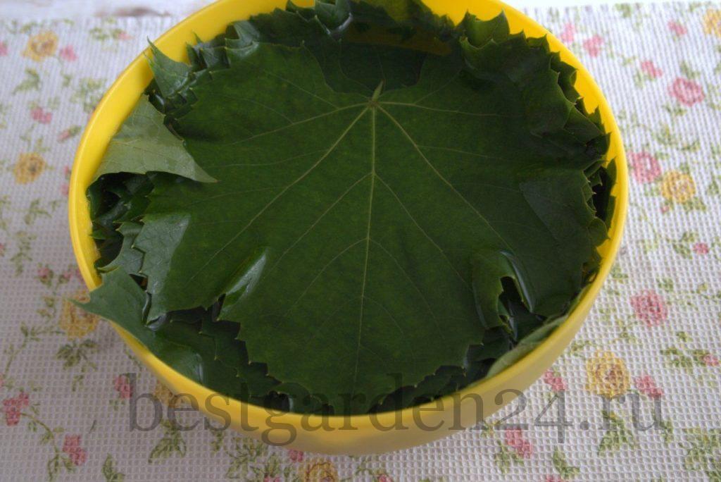 Листья винограда в воде